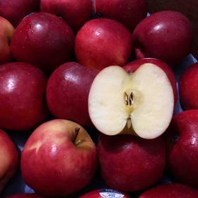 新西兰红玫瑰苹果 | 脆甜口感,甜度高,无酸