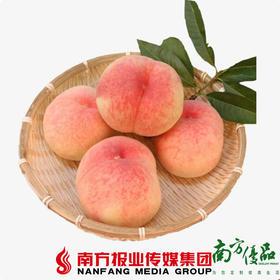 【珠三角包邮】原鲜汇 山东水蜜桃礼盒装 3.5-4斤/盒,6粒(9月28日到货)