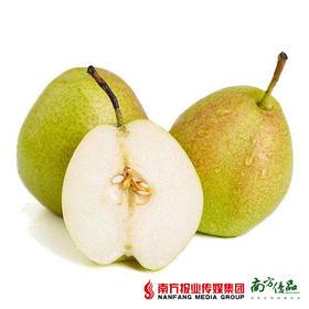 【珠三角包邮】新疆库尔勒香梨(新果上市) 5斤±50g/箱(次日到货)