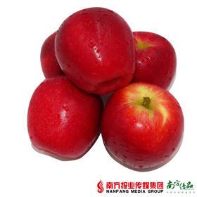 【珠三角包邮 】新西兰红玫瑰苹果礼盒 约3.8斤/箱(9月29日到货)