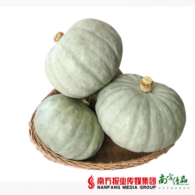 【珠三角包邮】新疆银栗南瓜 1.4斤-2斤/个  4个/份(9月28日到货)