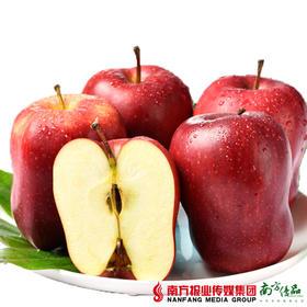 【全国包邮】天水花牛苹果礼盒  75-80#中大果 12粒装 约7斤/箱(72小时内发货)