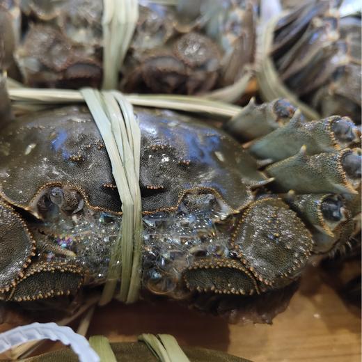 【太湖螃蟹】10只精品活蟹 高品质实重发货 商品图4