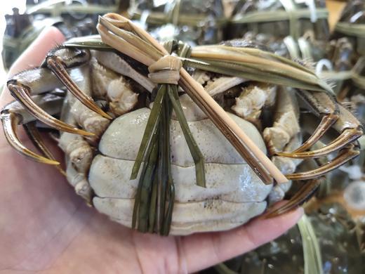 【太湖螃蟹】10只精品活蟹 高品质实重发货 商品图5