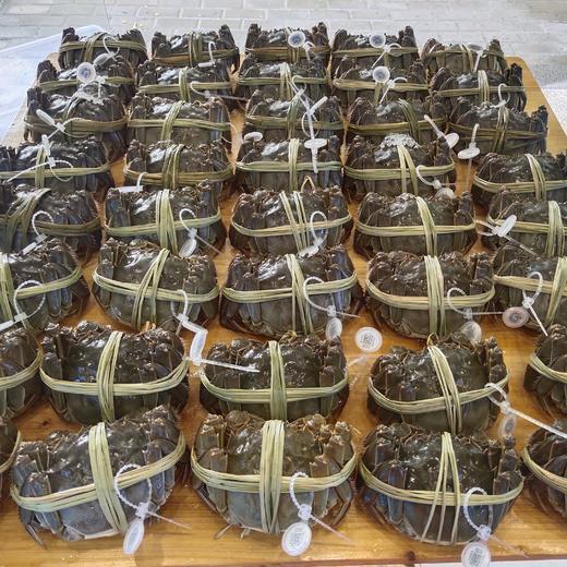 【太湖螃蟹】10只精品活蟹 高品质实重发货 商品图0