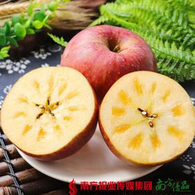【珠三角包邮】山东大凉山盐源苹果 5斤±50g/箱(9月30日到货)