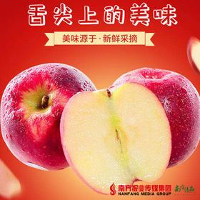 【珠三角包邮】农匠 国产红玫瑰苹果礼盒装 3斤±2两/盒(次日到货)