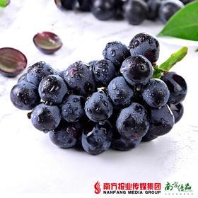 【珠三角包邮】龙鑫 新疆黑无籽提 5.5-6斤/件(9月30日到货)