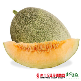 【珠三角包邮】龙鑫 新疆西州蜜25号 4-6斤/个 2个/份(9月30日到货)