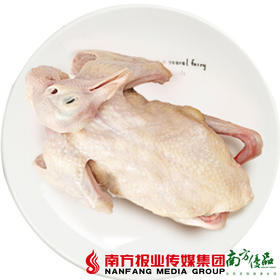 【珠三角包邮】乳鸽 250g±50g/只 2只/份(9月30日到货)