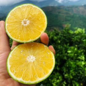 【云南玉溪冰糖橙】云南绿皮冰糖橙  果肉水嫩 橙香浓郁   清甜多汁   现摘现发  多规格可选 | 基础商品