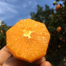 鲜美香甜·九月红宝宝橙子丨可以喝的宝宝橙 汁多肉嫩 细腻甜润 酸甜可口 产地现摘新鲜直达