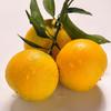 商品兑换丨鲜美香甜·九月红宝宝橙子丨可以喝的宝宝橙 汁多肉嫩 细腻甜润 酸甜可口 产地现摘新鲜直达 商品缩略图6