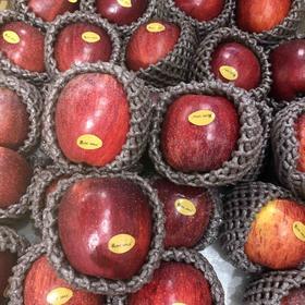 国产爱妃苹果  新西兰爱妃苹果品种,甜度高,味道浓,不易氧化