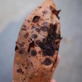 烤红薯   精选糖心红薯,烘烤1.5小时以上,甜糯可口