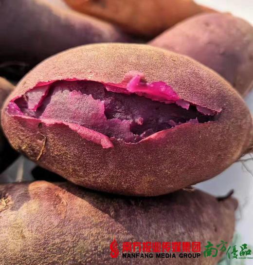 【全国包邮】山东沂蒙山紫罗兰紫薯 5斤±50g/箱(72小时内发货) 商品图2