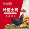 【珠三角包邮】天农岭南土鸡(鲜品) 2.8-3.2斤/只(次日到货) 商品缩略图1