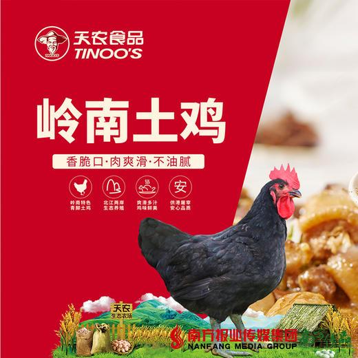 【珠三角包邮】天农岭南土鸡(鲜品) 2.8-3.2斤/只(次日到货) 商品图1