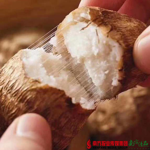 【全国包邮】山东沂蒙山奶白芋头 5斤±2两/ 箱(72小时内发货) 商品图0