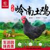 【珠三角包邮】天农岭南土鸡(鲜品) 2.8-3.2斤/只(次日到货) 商品缩略图0