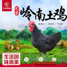 【珠三角包邮】天农岭南土鸡(鲜品) 2.8-3.2斤/只(次日到货)