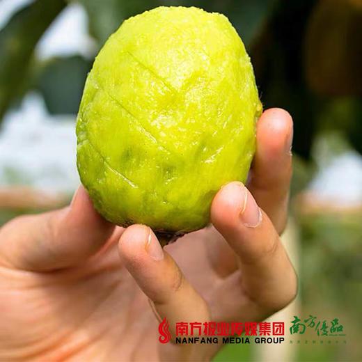 【珠三角包邮】湘西绿心猕猴桃 3斤±2两/箱(次日到货) 商品图2