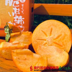 【全国包邮】柿愿 阳丰甜脆柿 5斤±3两/箱(72小时内发货)