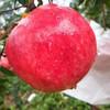 当季 | 河阴突尼斯软籽石榴 色泽艳丽 籽粒如红玛瑙 甜美多汁 女神必备 商品缩略图3