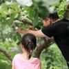 199元抢总价值1400元的2021嘉兴版水果护照!无限量畅吃+免费带走22斤水果+精品农场活动 带上孩子一起亲近大自然 商品缩略图12