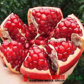 【珠三角包邮】鸿运当头 突尼斯软籽石榴 6个/箱 约3.5斤净果(10月31日到货)