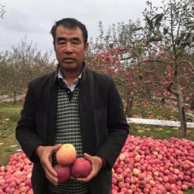 精选 | 陕西洛川富士丑苹果 脆甜可口 肉厚多汁 现摘现发 新鲜直达