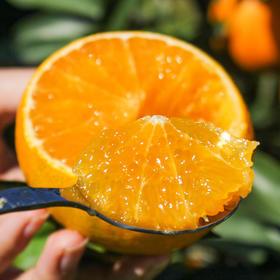 【果冻橙四川爱媛】皮薄肉厚 果肉细腻 酸甜多汁 可以吸的果冻橙 3斤/5斤/8斤装
