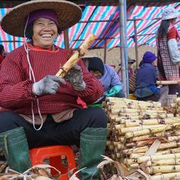 【助农】广西甘蔗  白玉甘蔗5斤/10斤装 新鲜水果 现砍现发
