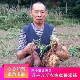 紧急求助!巴中革命老区近1000万斤农家蜜薯严重滞销,恳请爱心传递,帮帮他们! | 基础商品