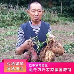 紧急求助!巴中革命老区近1000万斤农家蜜薯严重滞销,恳请爱心传递,帮帮他们!