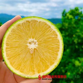 【全国包邮】云南哀牢山冰糖橙 5斤±5两/箱(72小时内发货)