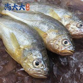 【江浙沪包邮】舟山野生捕捞冰鲜小黄鱼 49.9元 2斤 10-12条/斤
