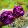 【山东 • 紫薯】营养粗粮 粉糯无丝 含天然花青素及多种矿物元素 氨基酸 维生素 商品缩略图3