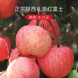【现摘现发】纯人工施肥、泉水灌溉 陕西红富士苹果 优质产源 果肉纤维少、不打蜡寻找苹果本味