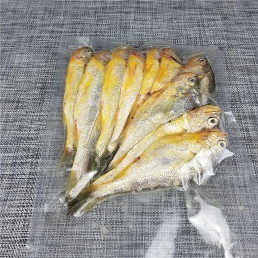 【江浙沪包邮】舟山野生捕捞冰鲜小黄鱼 49.9元 2斤 10-12条/斤 商品图4