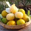 上新   广西皇帝柑  新鲜水果  清甜爽口 皮薄多汁 现摘现发 商品缩略图4