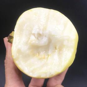 【福建●黄金软芭乐】低糖低卡路里代餐水果,果园现摘现发,软糯香甜,低热量 糖尿病人也能吃的健康水果!【下单送酸梅粉】