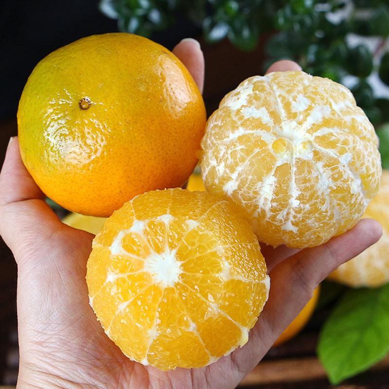 上新   广西皇帝柑  新鲜水果  清甜爽口 皮薄多汁 现摘现发 商品图3