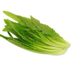 【时令蔬菜】油麦菜500g±20g