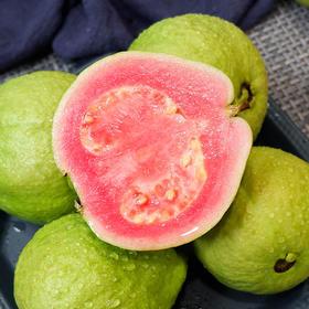 红心番石榴 芭乐 清脆鲜甜 软糯香甜 低糖健康水果  现摘现发 | 基础商品