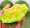 绿宝石甜瓜  现摘现发  顺丰包邮   果肉鲜甜香脆多汁 商品缩略图3