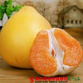 【珠三角包邮】启航 梅州黄金蜜柚 2.5斤-3.5斤/个 2个/份(次日到货)
