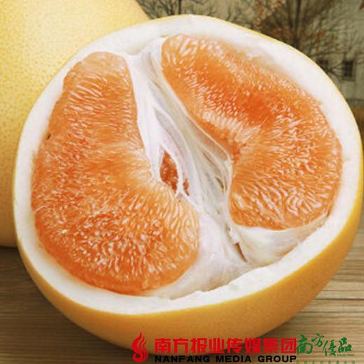 【珠三角包邮】启航 梅州黄金蜜柚 2.5斤-3.5斤/个 2个/份(次日到货) 商品图3