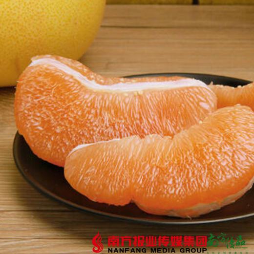 【珠三角包邮】启航 梅州黄金蜜柚 2.5斤-3.5斤/个 2个/份(次日到货) 商品图1