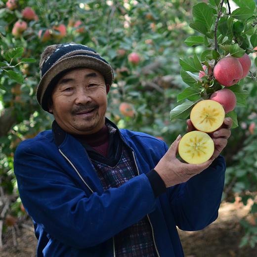 [阿克苏糖心苹果 ]清甜脆爽  果香浓郁  8斤装 商品图4